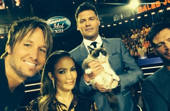 idol judges and grumpy cat