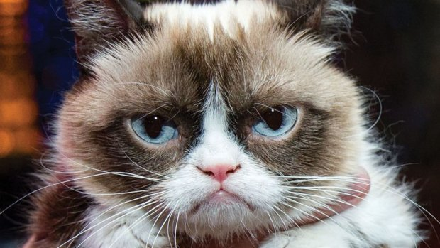 too_good_for_grumpy_cat